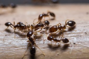 ant prevention and control