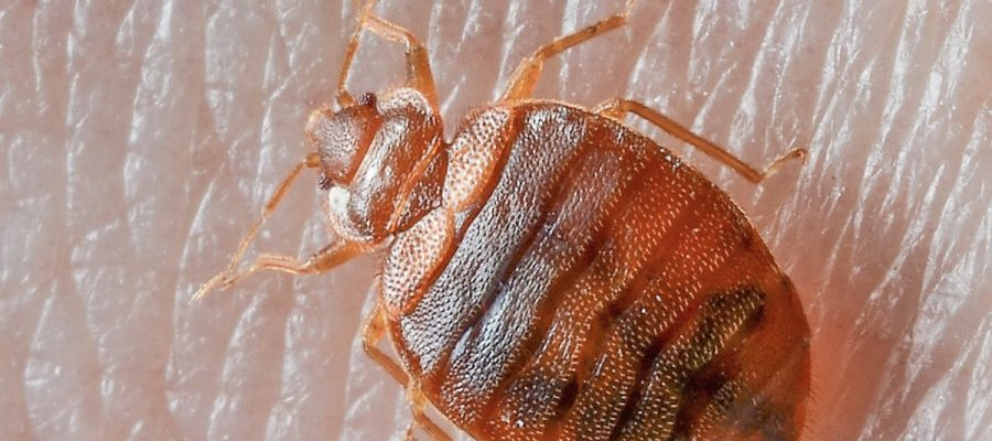 How to tell if you have bed bugs