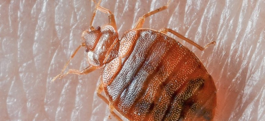 Bed Bug Treatment Is Mandatory, Not Just An Option As They Really Do Bite!