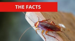 Weird & Disgusting Facts about Cockroaches