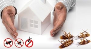 Flea Control – Get it Under Control with Flea Treatment Tips