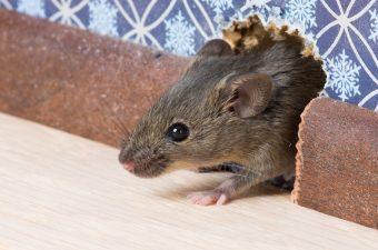 rat-prevention