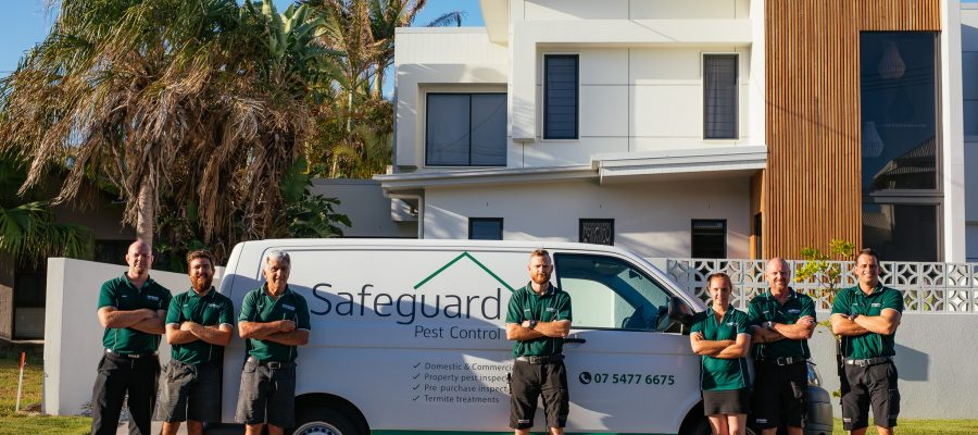 Termite Treatment How Much Does It Cost Safeguard Pest Control