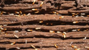 Termite Control: What Is A Termite Barrier?