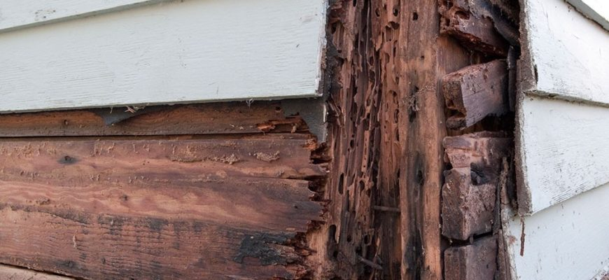 A Mystery Behind Your Walls – Could There Be Termites?