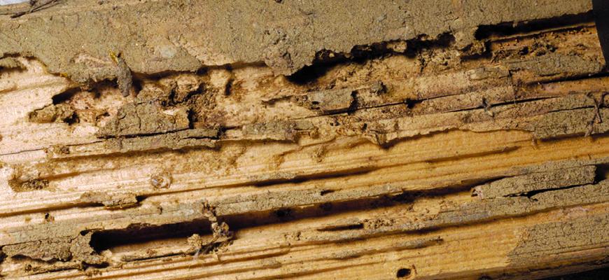 Termite Control on the Sunshine Coast
