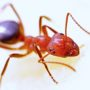 Ant Identification and Control