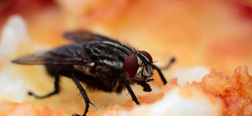 How to Protect your home from Flies