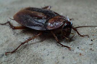 Summer Pest Inspection