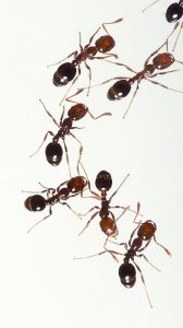 How to Protect Your Home From Ants.