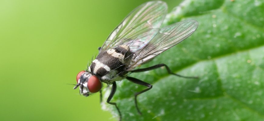 Pests Carry Bacteria & Spread It: How Pest Control Can Help?