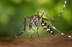 Don't Let Mosquito's Take over This Season, Get Pest Control