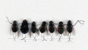 Why Do You Need Pest Control For Flies