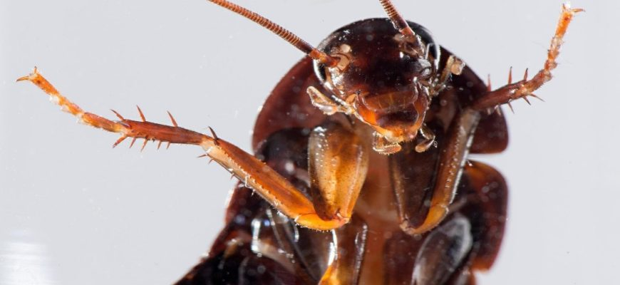 Cockroaches – There's Never Just One!