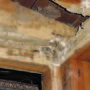 Preserve Your Property's Value with Termite Treatment