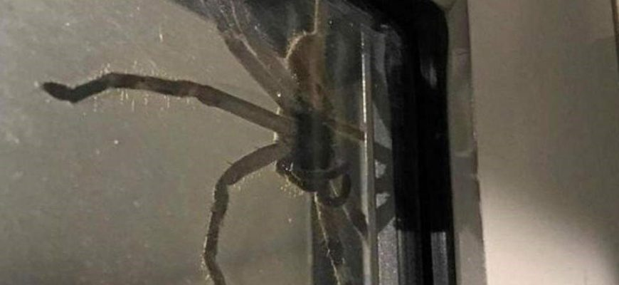 10 Facts about Sunshine Coast Spiders That You Must Know