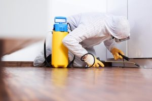 Why You Should Hire Professional Pest Control Services