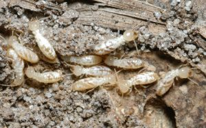 7 Things That Will Attract Termites To Your Home