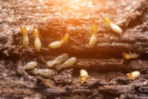 How Do Termites Get Into Your Home