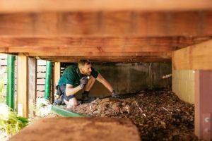 How Do Termites Get Into Your Home?