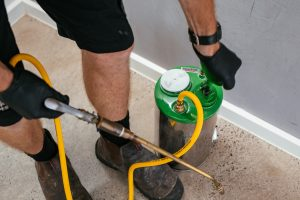 DIY Termite Treatment vs. Professional Termite Control