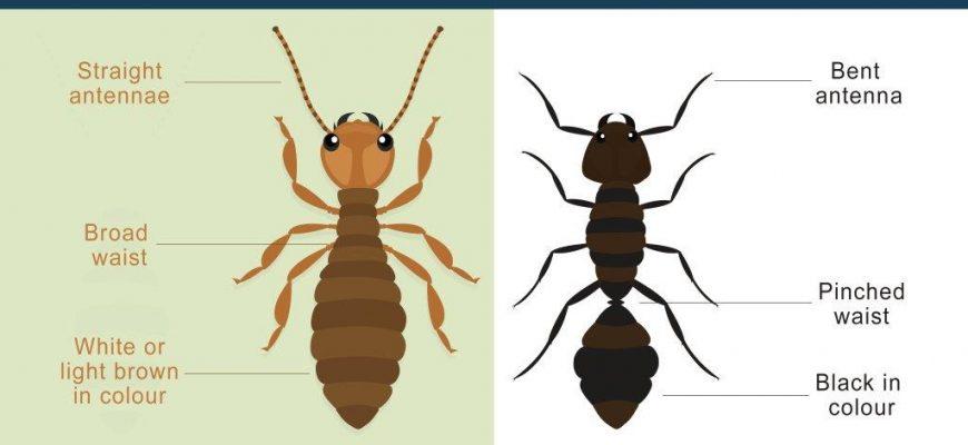 How To Identify Termites?