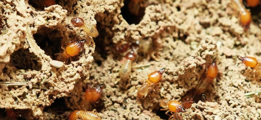 What Attracts Termites to Your House?