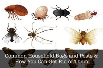 The 7 Most Common Household Bugs in Australia