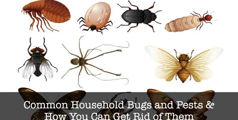 Unwanted Roommates: The 7 Most Common Household Bugs in Australia