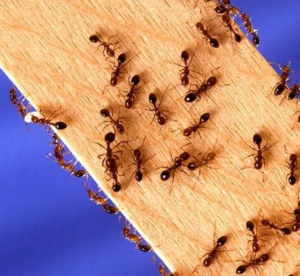 Pest Prevention: 9 Tips For Staying Pest-Free All Year