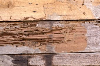 The Effects of Termite Damage