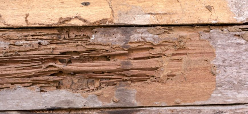 What Are the Potential Effects of Termite Damage?