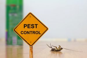 Don't Bug Out: 7 Tips for Choosing a Reliable Pest Control Service
