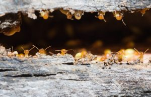 Termite Prevention: How to Protect Your Home From Termites
