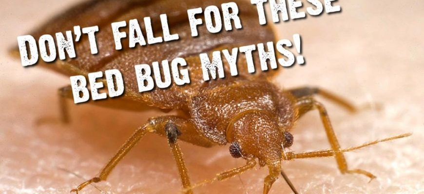 7 Common Bed Bug Myths