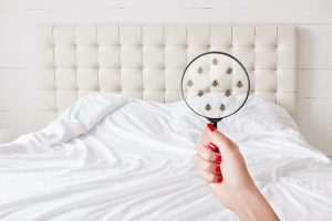 How to Get Rid of Bed Bugs Quickly: The Top Tips to Know
