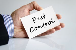5 Things You Should Do Before Pest Control Arrives