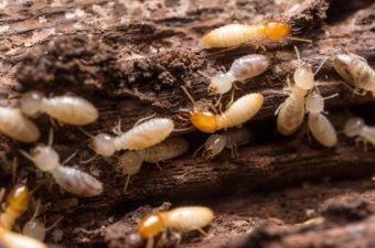 11 Interesting Termite Facts You Need to Know