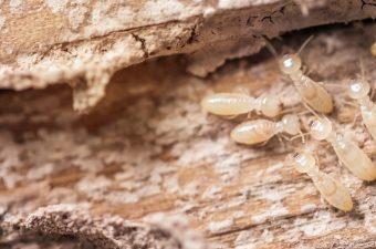 home termite repair