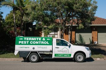 regular pest control treatments
