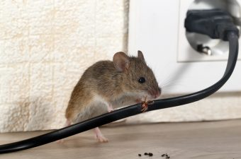 how do mice get in