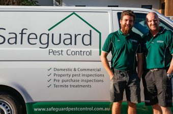 termite damage insurance